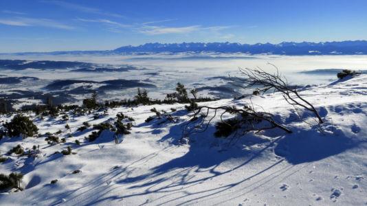 widok spod Babiej Góry na Tatry