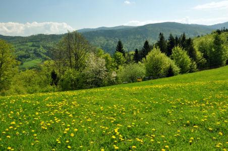 lato w Beskidzie Śląskim